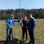 Высаживаем деревья